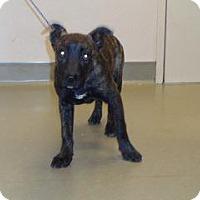 Adopt A Pet :: Missy - Wildomar, CA