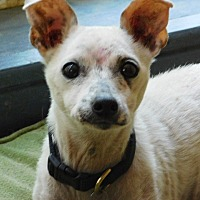 Adopt A Pet :: ODELE - Millerstown, PA