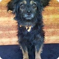 Adopt A Pet :: Jesse - Troutville, VA