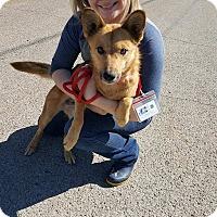 Adopt A Pet :: Stephanie - Hopkinton, MA