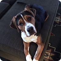 Adopt A Pet :: Virgil - Doylestown, PA