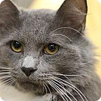 Adopt A Pet :: Hero - Alexandria, VA