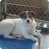Adopt A Pet :: S661 Holly - Bay Springs, MS