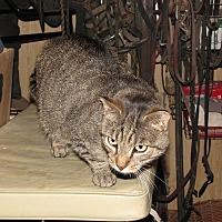 Adopt A Pet :: PAVILION - Millerstown, PA