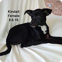 Adopt A Pet :: Kindall meet me 1/6 - Manchester, CT