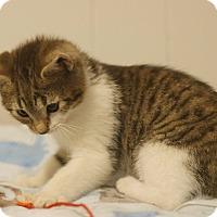 Adopt A Pet :: Penn - Stafford, VA