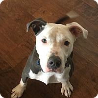 Adopt A Pet :: Wayne - Colorado Springs, CO