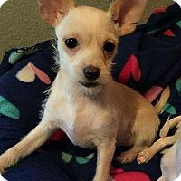 Adopt A Pet :: Harper - Yuba City, CA
