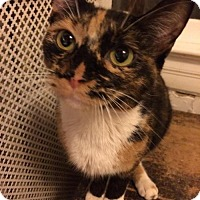 Adopt A Pet :: Donna - Washington, DC