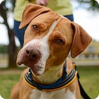 Adopt A Pet :: Princess - Greenwood, SC