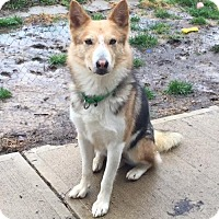 Adopt A Pet :: LADDIE-SPECIAL NEEDS - Amherst, OH
