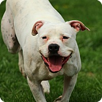 Adopt A Pet :: Royal - Lafayette, IN