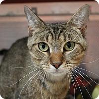Adopt A Pet :: Sanchez - Sarasota, FL