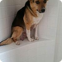 Adopt A Pet :: Marissa - Phoenix, AZ