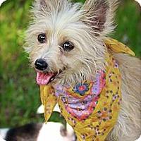 Adopt A Pet :: Priscilla - Albany, NY