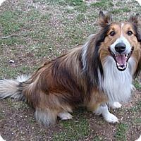 Adopt A Pet :: Jake - PENDING - Abingdon, MD