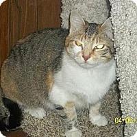 Adopt A Pet :: calicos - Norwich, NY