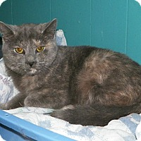 Adopt A Pet :: Runtie - Dover, OH