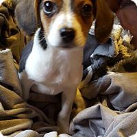 Adopt A Pet :: Symphony - Cleveland, OH