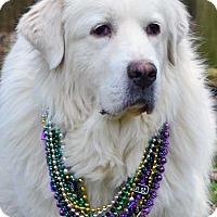 Adopt A Pet :: Sheba - Beacon, NY