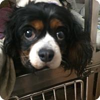 Adopt A Pet :: Juliette - Oak Ridge, NJ