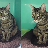 Adopt A Pet :: JASPER - Cliffside Park, NJ