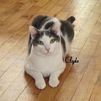 Adopt A Pet :: Clyde - Houlton, ME