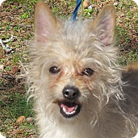 Adopt A Pet :: Brady 9 lbs - Allentown, PA