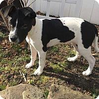 Adopt A Pet :: Ella - Jackson, NJ