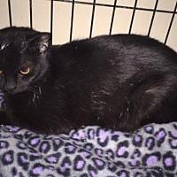 Adopt A Pet :: Wanderer - Glendale, AZ