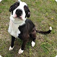 Adopt A Pet :: Rascal - Larned, KS
