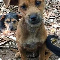 Adopt A Pet :: Fitz - Centerville, GA