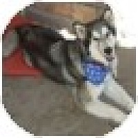 Adopt A Pet :: Kallie - Golden, CO