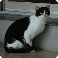 Adopt A Pet :: Milkshake - Troy, OH
