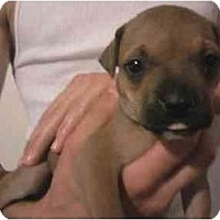 Adopt A Pet :: 3 females - Fowler, CA