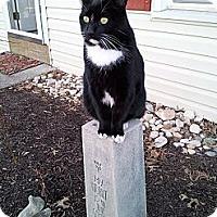 Adopt A Pet :: Pronger - New Egypt, NJ
