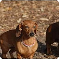 Adopt A Pet :: Tasha - Ft. Myers, FL