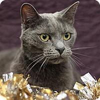 Adopt A Pet :: Julia - Sacramento, CA