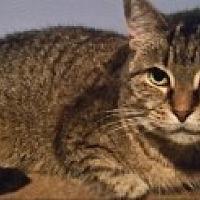 Adopt A Pet :: Mindy - Livonia, MI