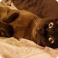 Adopt A Pet :: Angela - Davis, CA