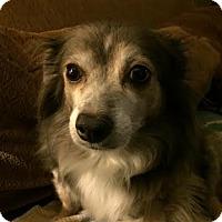 Adopt A Pet :: Jac - Acushnet, MA