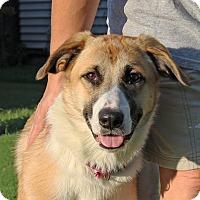 Adopt A Pet :: Bridget - in Maine - kennebunkport, ME