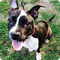 Pit Bull Terrier Dog for adoption in Claxton, Georgia - Jasper
