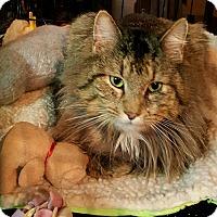 Adopt A Pet :: Emmett - brewerton, NY