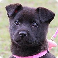 Adopt A Pet :: Emmy - San Ramon, CA
