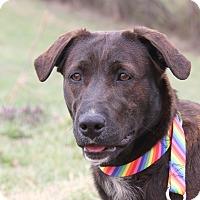 Adopt A Pet :: Sassy - Marietta, OH