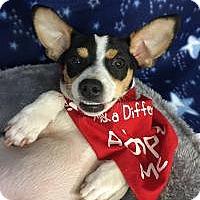 Adopt A Pet :: Charlotta - Greensboro, GA