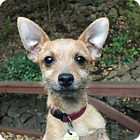 Adopt A Pet :: GRETA - Emeryville, CA