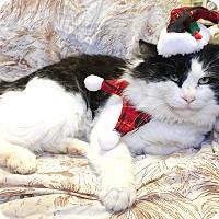 Adopt A Pet :: Mr. Jingles - Avon Park, FL