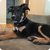 Adopt A Pet :: Webster - Sagaponack, NY